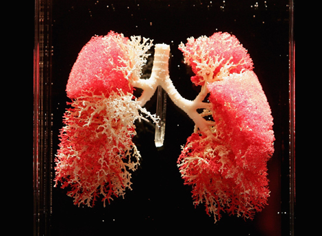 Lungs, Bodies Exhibit
