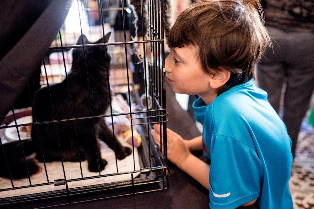 SteveScap-Internet_Cat_Vid_Fest-0095.jpg