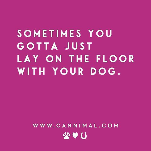 A little dog hair never hurt anybody. 💕 #dogmeme #layonthefloorwithyourdog #seperationanxiety #dogquotes #dogtrainer #relax #hikingwithdogs #olddog #seniordog #cbdoil #dogcancer  #animalcommunication #dogsofinstagram  #rawdog #petfood #woof #furbaby #cannabiz  #mjbiz #cannimal #cannabis #cbd #thc #cbddogtreats #cbdfordogs #catsofinstagram #cbdoilfordogs #cbdoilforcats #petcbd
