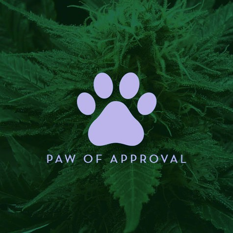 NonGMO? ✅  Organic? ✅  Grain free? ✅  Plain and simple, Cannimal is for those who care about the quality of CBD products they give to their animal companions 🐾🍃🥇 #adaptogens #cancer #cancerdog #pain #arthritis #veterinarian #dogtrainer #hikingwithdogs #cbdfordogs #dogwithcancer  #animalcommunication #dogsofinstagram #catsofinstagram  #rawdog #petfood #woof #furbaby  #cannabiz  #cannimal #olddog #cannabis #cbd #thc #cbdoil #hempoil #petcbd #organic #cbdoilfordogs #organicdogtreats