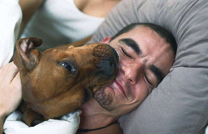 dog-licking-humans.jpg