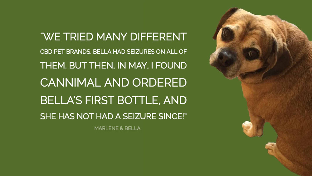 """""""Bella is an 11 year old puggle who started having seizures as a puppy then she had more seizures as she got older- one even lasted 30 min!  The vet ran test couldn't find any cause for her seizures. HE recommended the typical seizure meds- Phenobarbital or Potassium   Bromide.. I had a boxer that also had a seizure disorder and we used these drugs on him and he lost the ability to use his hind legs which the vet explained was a side effect of Potassium Bromide, because of this I elected to steer clear of these drugs.  We tried many different CBD pet brands, Bella had seizures on all of them. But then, in May, I found Cannimal and ordered Bella's first bottle of  Wellness Formula , and she has not had a seizure since!"""""""