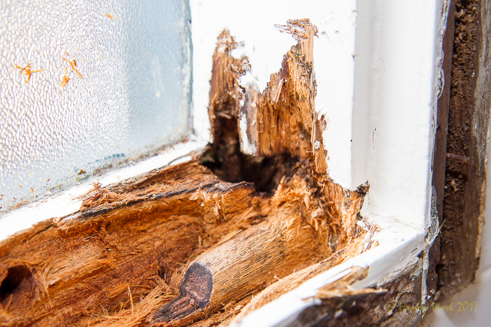 Wood Rot & Termite Repairs — Handy Work