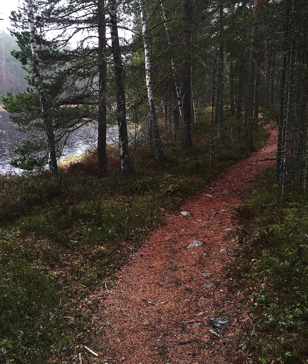 Typsik stig vid Gruvriset. Foto: Martin Ogemar