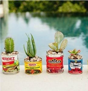 cinco plants.jpg