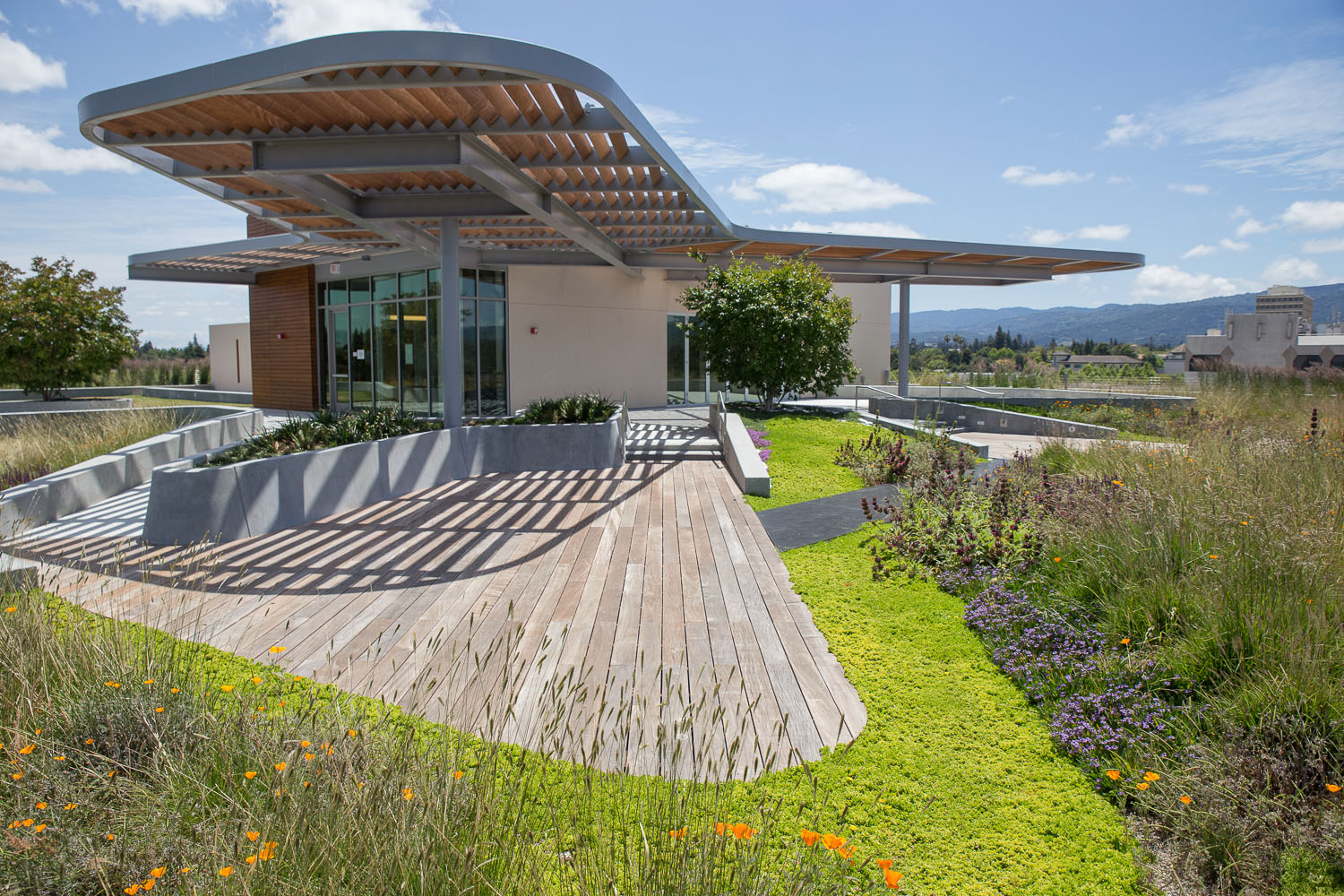899 West Evelyn Living Roof — Rana Creek Design