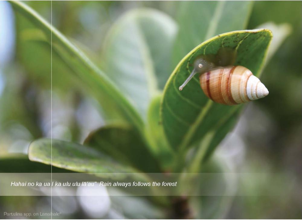 snail copy.jpg