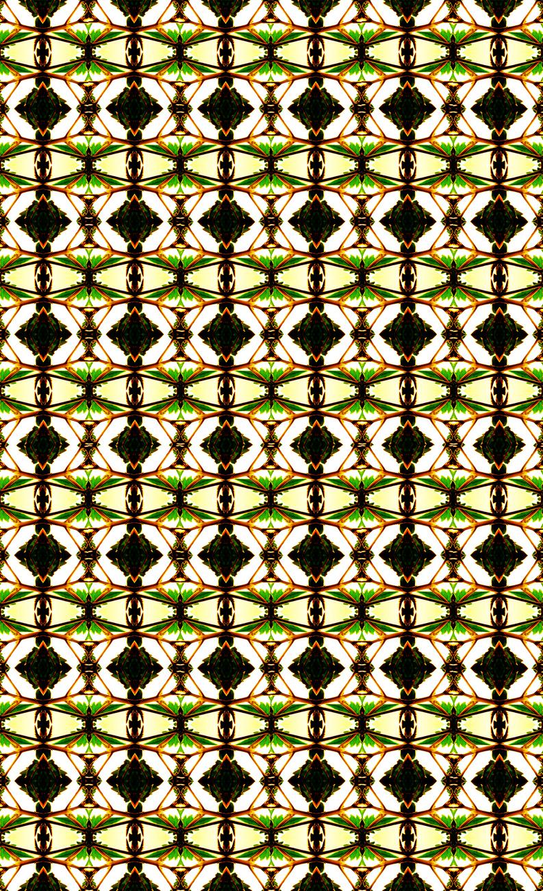 12 fractals of...jpg