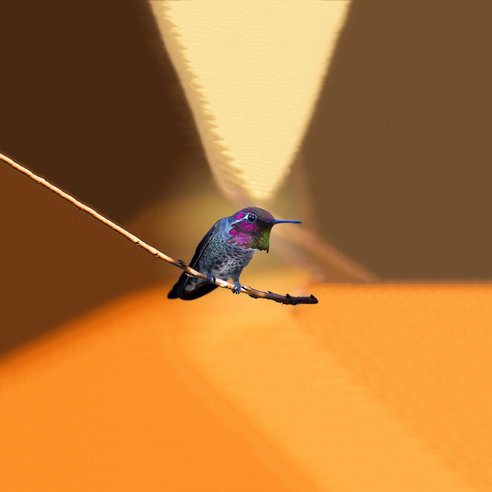 Ignavus Auspex - A_Tropical_Bird.jpg
