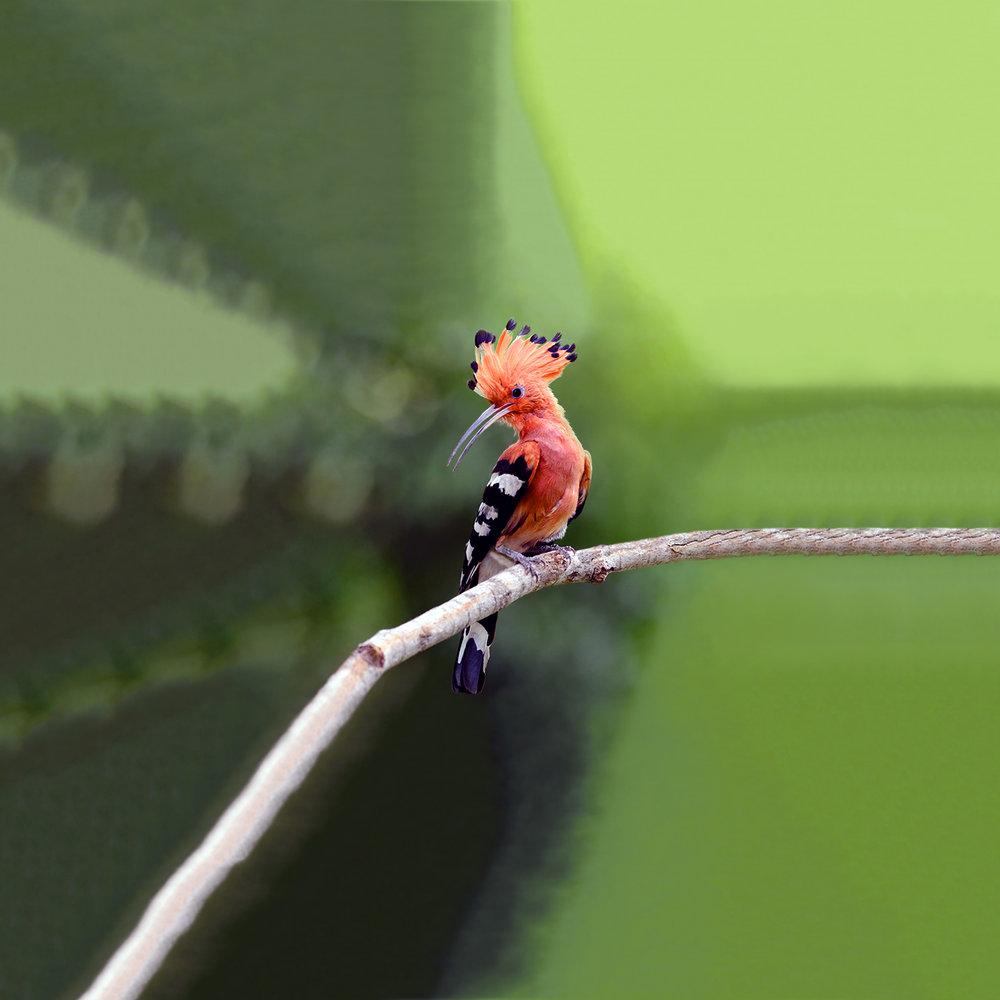 Ignavus Auspex - Bird_116c27812635.jpg