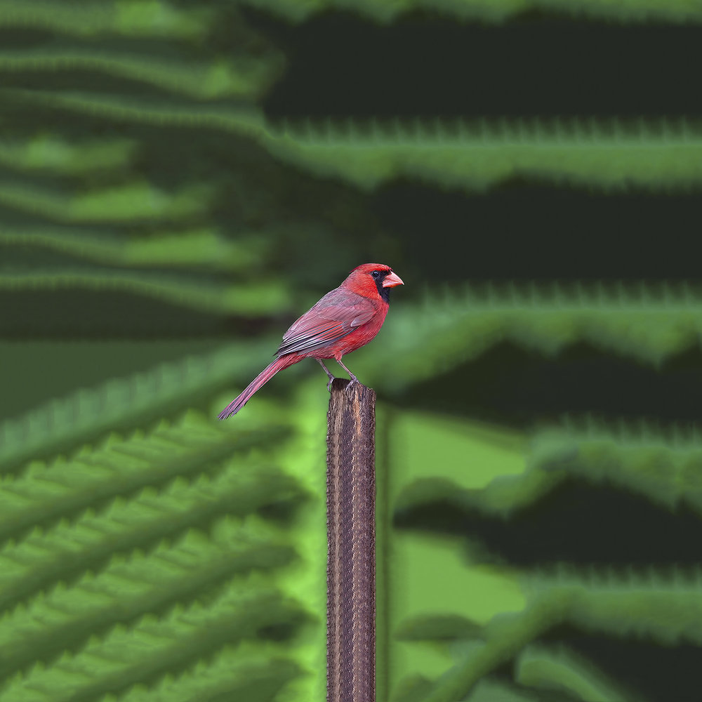 Ignavus Auspex - Bird_527135618_jpg.jpg