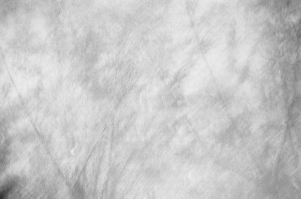 Salix Alba_I.jpg