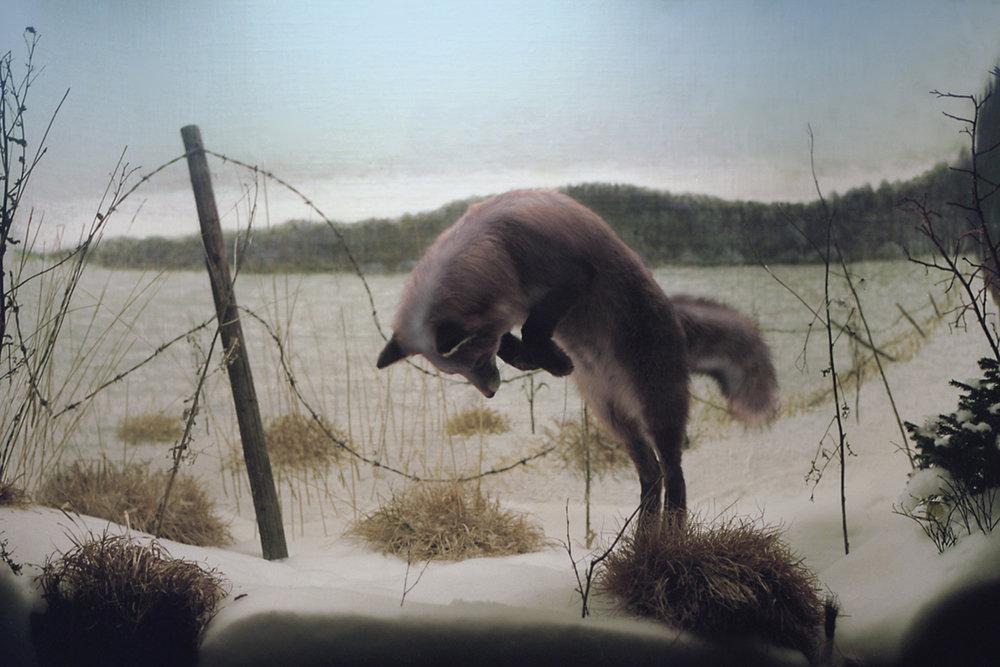 foxinwinterland.jpg