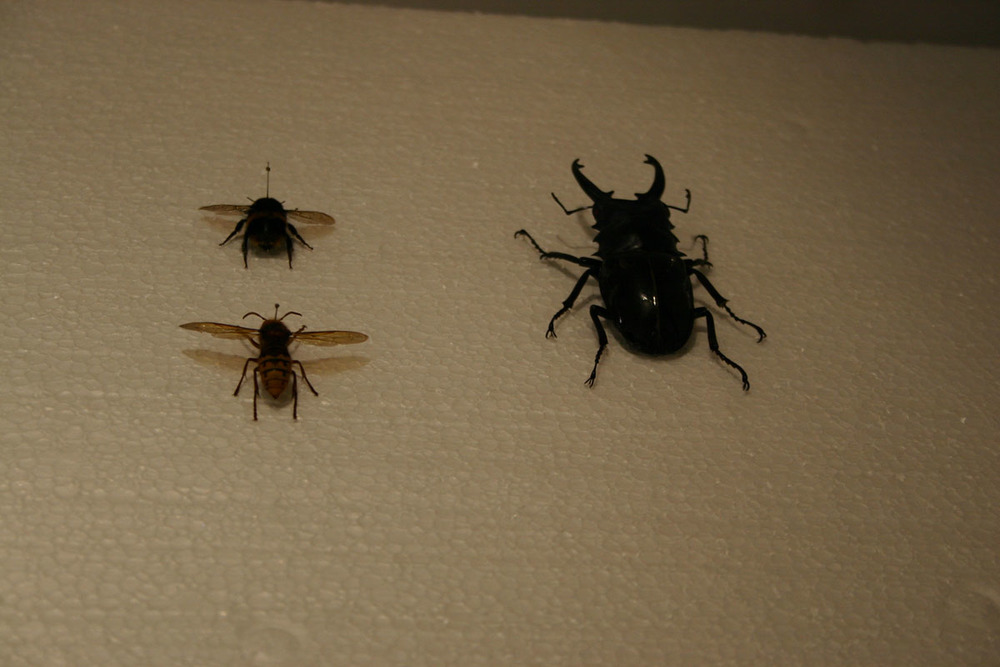bugs_02.jpg