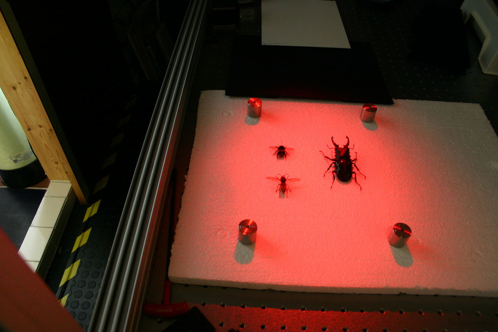 bugs_04.jpg