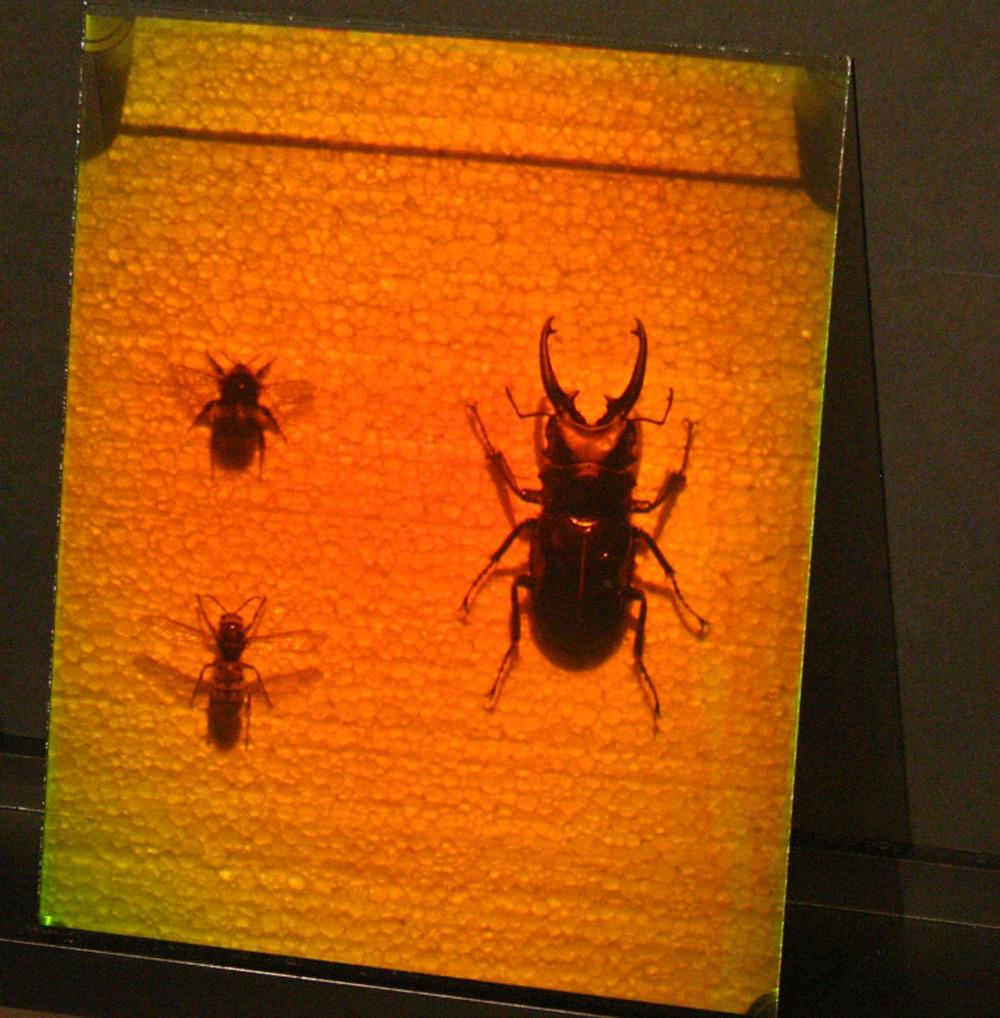 bugs_05.jpg