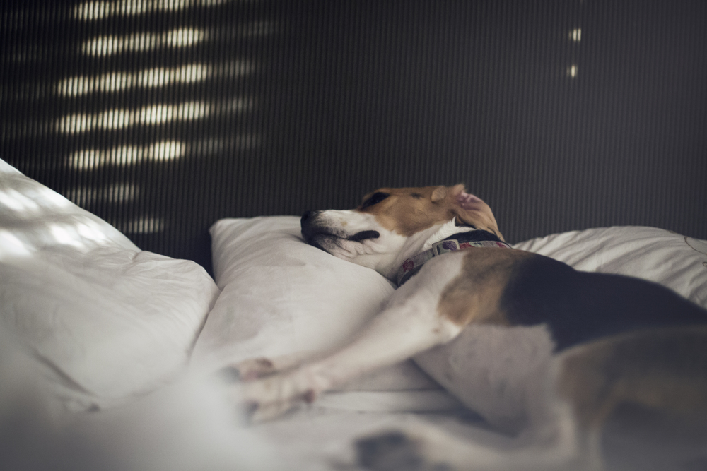 Documental Family Dog Sara correia Photography.jpg