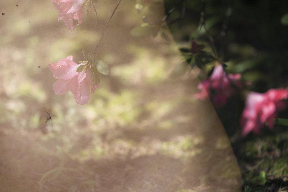 portrait-conceptual-multiple-exposure-sara-correia-photography.jpg