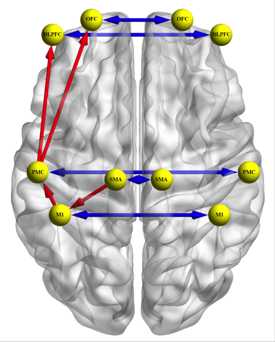 Dynamics of the human brain network revealed by time-frequency effective connectivity in fNIRS.  Reprinted with permission from Stephane Perrey