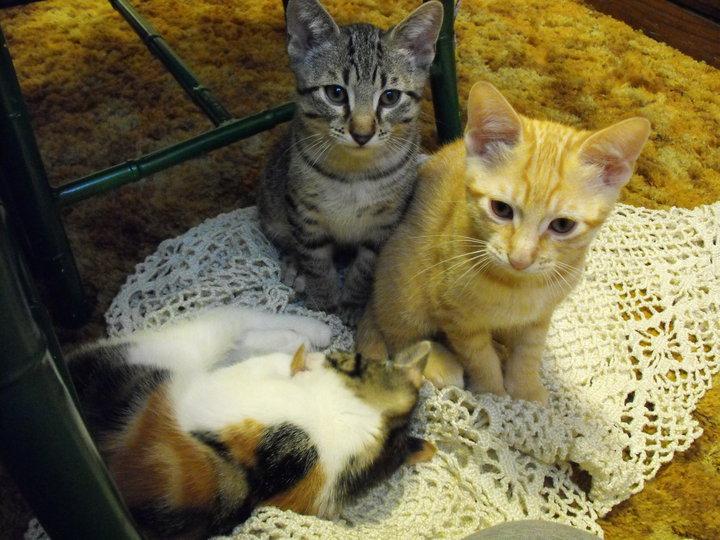 Lola, Jasper and Peapot 2.jpg