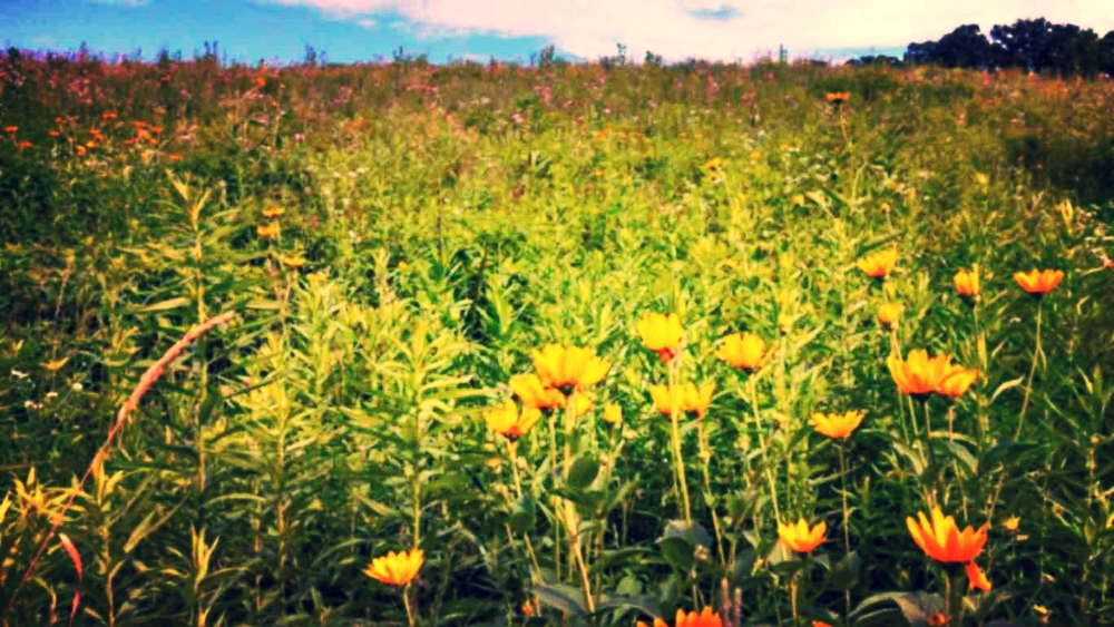 Botanical Surveys    Learn More