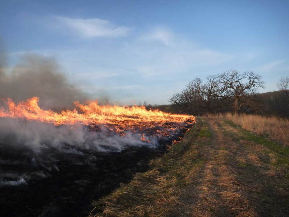Headfire on a prescribed burn of a Conservation Reserve Program (CRP) prairie on a farm near New Glarus, Green County, Wisconsin