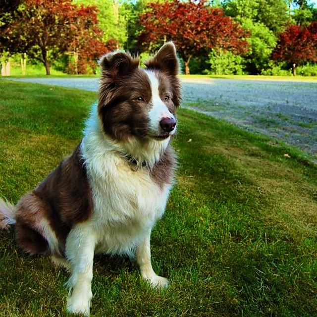 June arrived with a letter of introduction in my inbox from Logan Szidik, a young style entrepreneur looking to corner the market on preppy dog collars. No kidding: Szidik, a 23-year-old who graduated last year from the University of Vermont, has launched a collection called  Logan Richard  featuring collars for canines and belts for humans. I asked him to tell us more. — CC   * * *  IS: How did Logan Richard  come about?  LS: I began making belts the summer of my freshman year in college while living on Cape Cod. I was working at the Hyannisport Gold Club, and became inspired by some of the older golfers who dressed unapologetically preppy on the course. I had a few of my old ties from boarding school sewn onto belts by a leather-worker in West Yarmouth, and realized that I might be on to something.  IS: And the dog angle?  LS: I'm a huge dog person, and the dog accessories became the main focus of the project when I realized there was nothing quite like them available on the market. The idea is to be able to match your furry best friend, while showing that you and your pooch both appreciate the timeless aesthetic of New England. I chose silk, because there just seems to be something about the unmistakable quality and sheen of the fiber not seen in any other fabric. Pair a material as beautiful as silk with the traditional Ivy League-inspired stripes and tartans and you have a product that will set your dog away from the rest of the pack. A gentleman should have the option to equip his dog with the same high-quality products that he himself wears.  IS: Where do you get the materials?  LS: The leather I source is genuine American, vegetable tanned leather of equestrian quality. The silk is sourced from a 17th-century mill in England, and is hand-sewn onto each product right here in Vermont.  IS: What's next for you?  LS: A  selection of fall designs will be released in October. Look out for a tweed and some fun motif fabrics. Down the road I will slowly continue to release limited collections on the website, as well as through select retailers. College and boarding school prints may be available in the future as well, although no time frame has been determined. I am currently working to identify and reach out to a handful of schools.  I run the business entirely on my own.  I still have a long way to go, but this is my passion and I plan to pursue it as long as I am able.