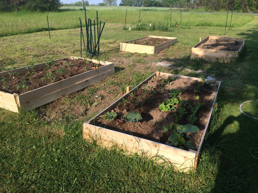 Four raised beds