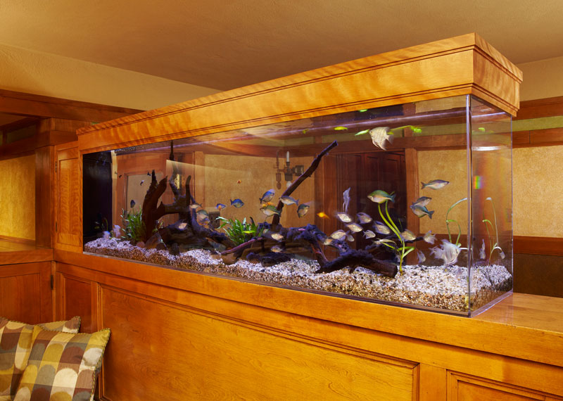 Aquarium Surround