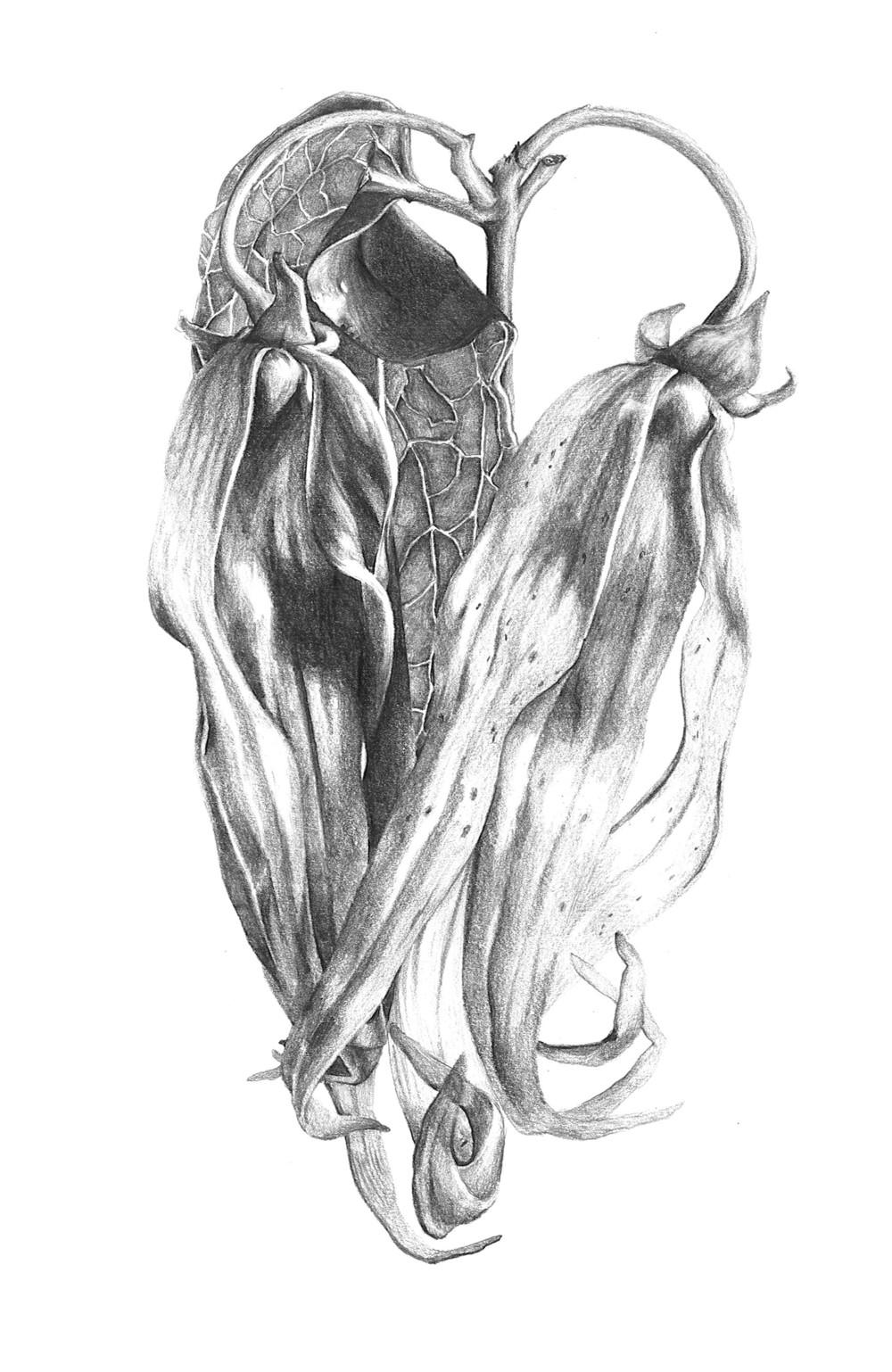 Ylang Ylang_ORIGINAL.jpg