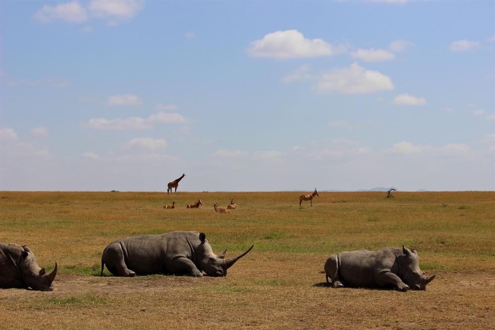 safari1.jpeg