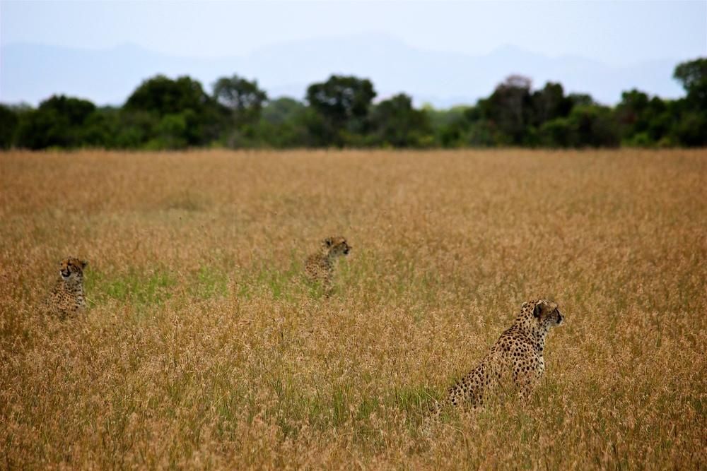 safari5.jpeg