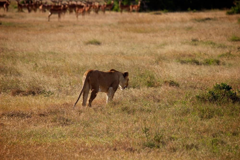 safari6.jpeg