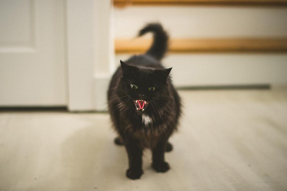 06-crazy-cat.jpg