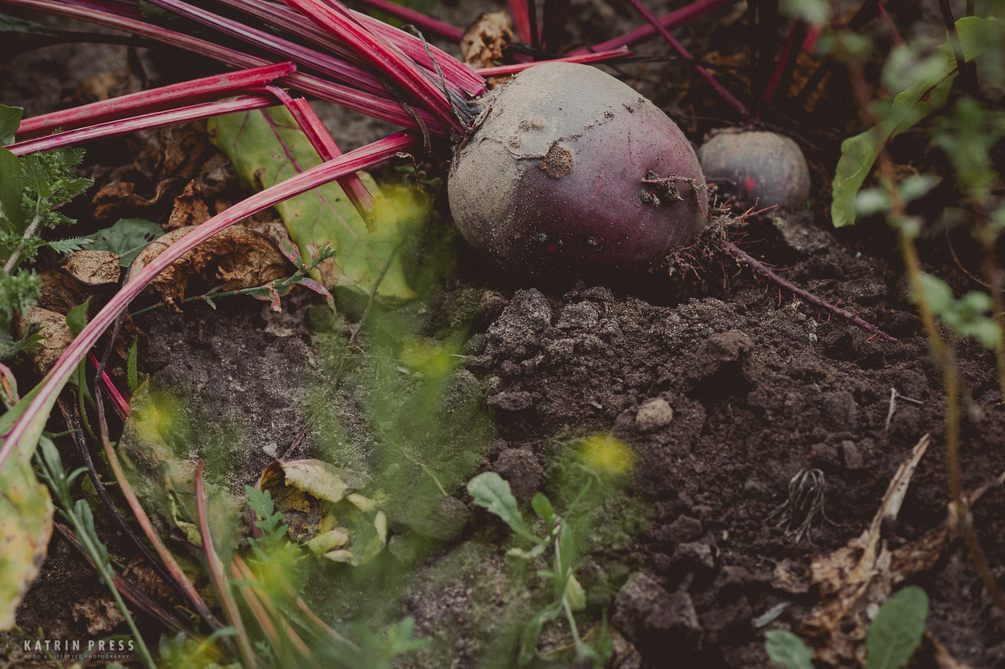beetroot love