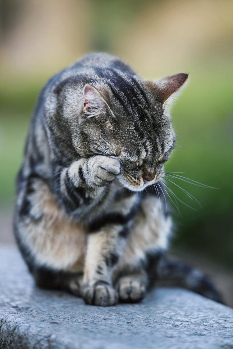 nhf cat.jpg