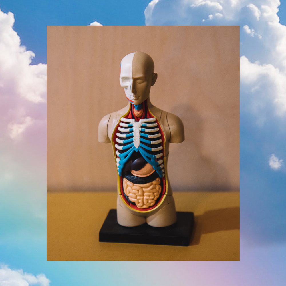 Sunday, May 19th 12-3pm Tribeca $175   In this second installment of ANATOMĒ, we will delve deeper into all the major organs and glands in our bodies and their functionality. We will discuss the nervous system, our balance systems and the art of breathing properly. There will be some movement to make the material more applicable to our practice and our teachings. No need to have taken ANATOMĒ 1.0 in order to take this module! Open to students and teachers alike.  Book your spot   HERE     or e-mail  info@skytingyoga.com    Workshop reservations must be canceled at least 24 hours in advance for a store credit only (applicable to future workshops, classes, or merchandise).