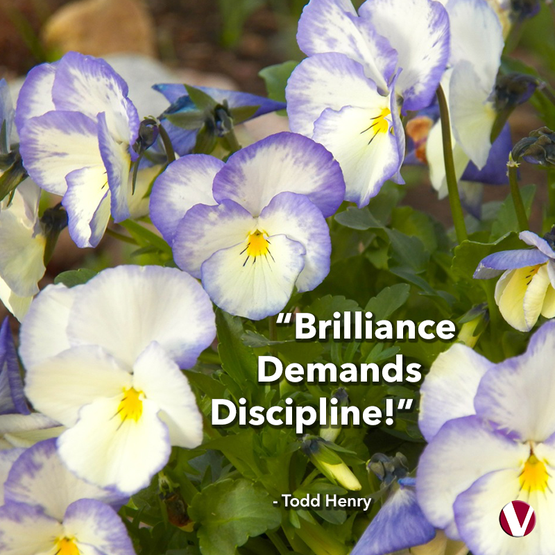 brilliance demands discipline