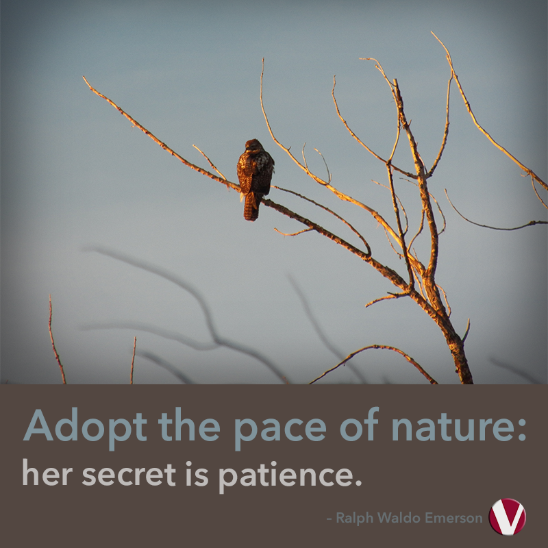 adopt the pace of nature