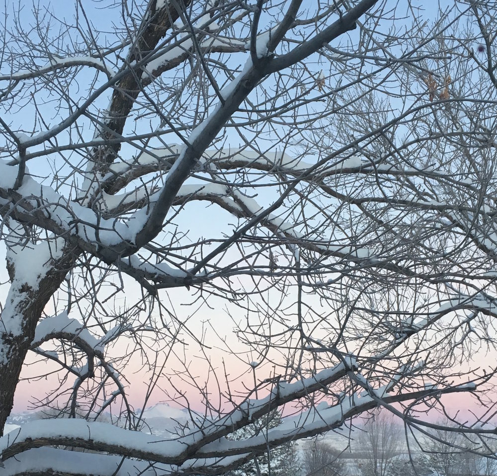 Snowy Trees Sunrise.JPG