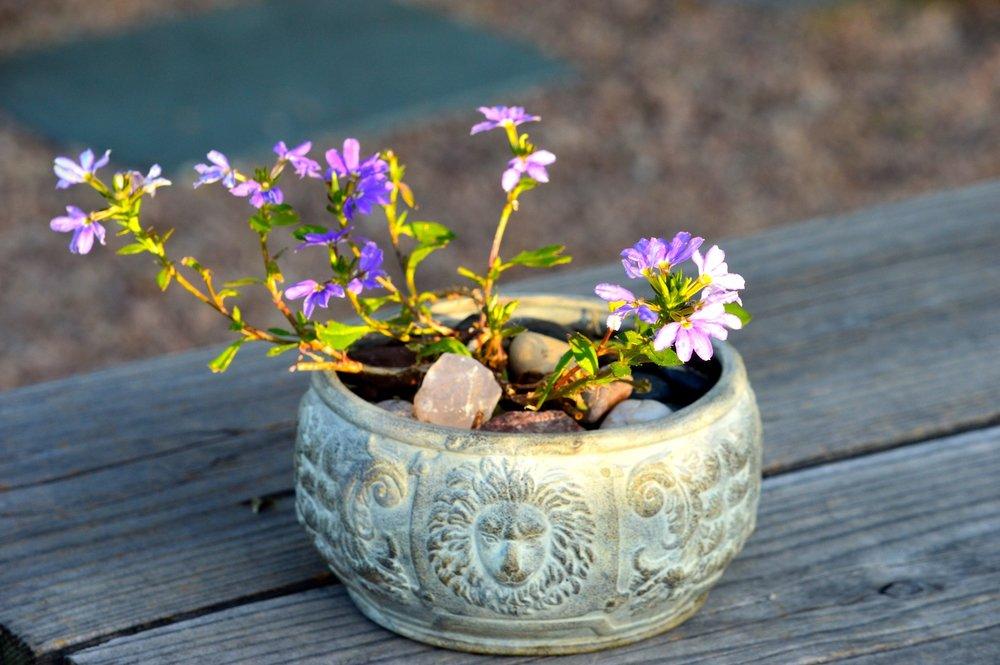 purple flower Cheri Ruskus.jpg