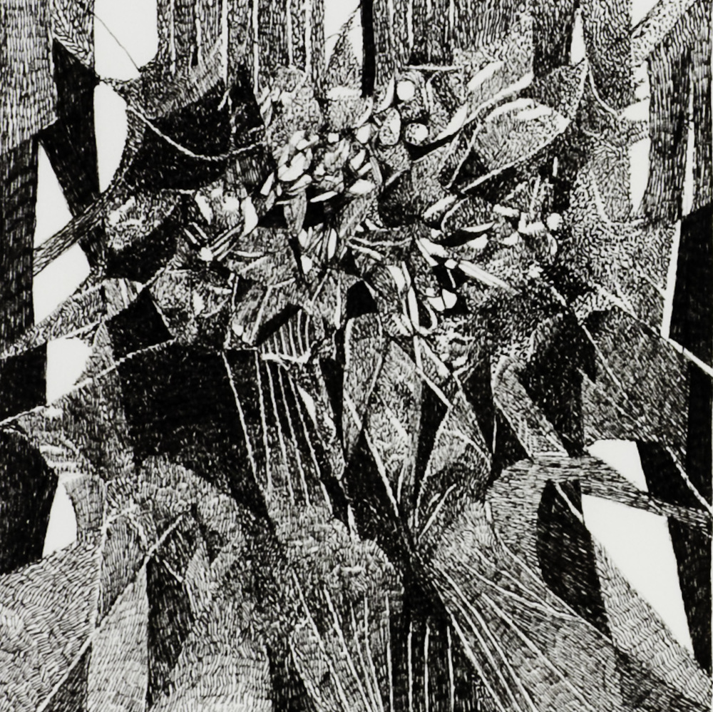 Barbara Dahn   Tulipan #1 , 2008  Ink on paper