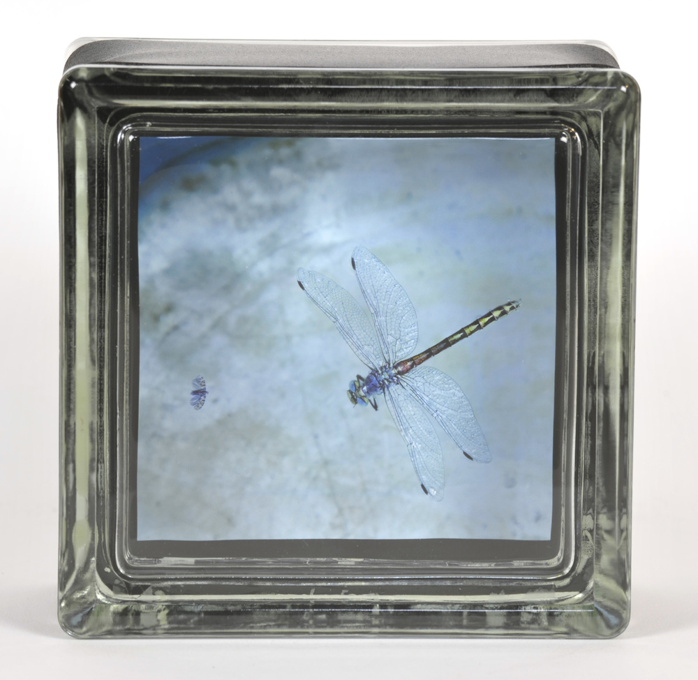 Elizabeth Stone   Lucy's Waterbowl Dragonfly , 2010  Archival pigment print encased in glass book