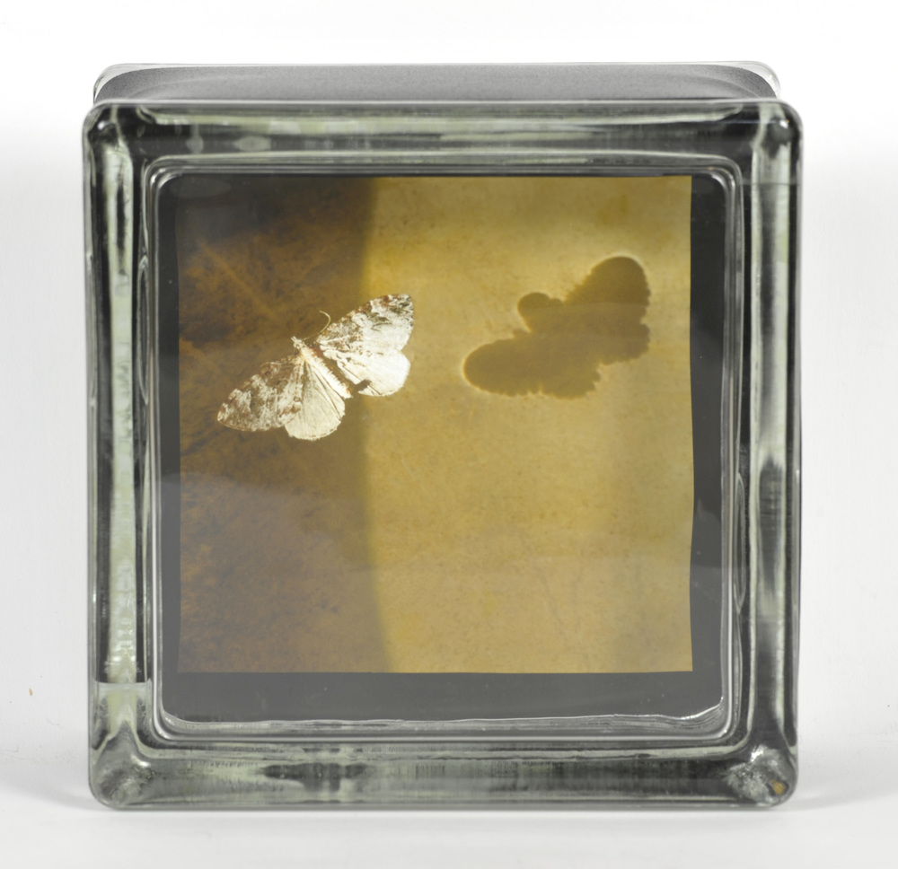 Elizabeth Stone   Lucy's Waterbowl Moth , 2010  Archival pigment print encased in glass