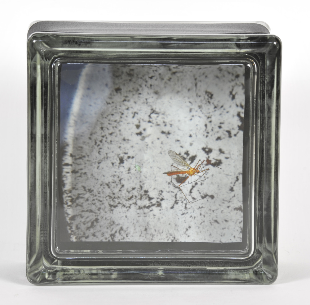 Elizabeth Stone     Lucy's Waterbowl Mosquito Catcher , 2010  Archival pigment print encased in glass block