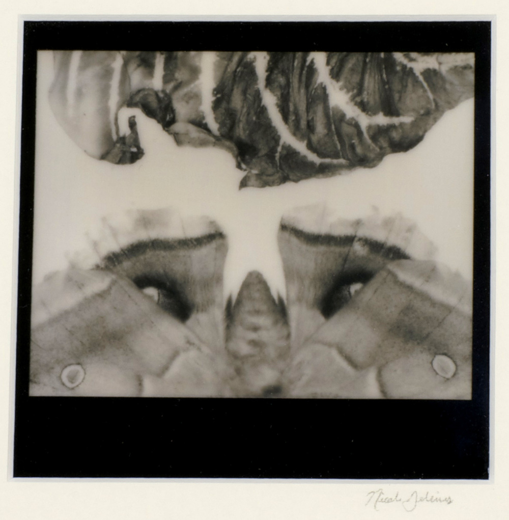 Nicole Gelinas     Remnants , 2012  Polaroid photography
