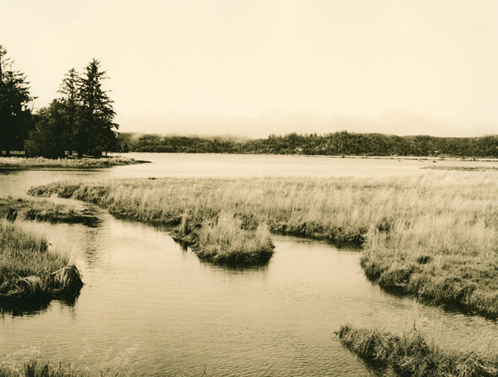 "Joan Bowers  ""Estuary with Fog,"" 2012  pith print photograph  Seattle, WA  8""x10""x0""  $195"