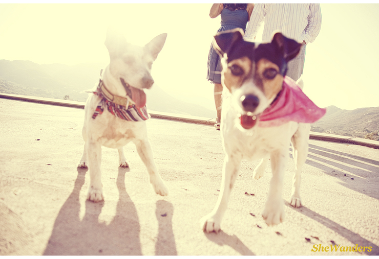 dogs with scarves, san diego wedding photography, shewanders photography