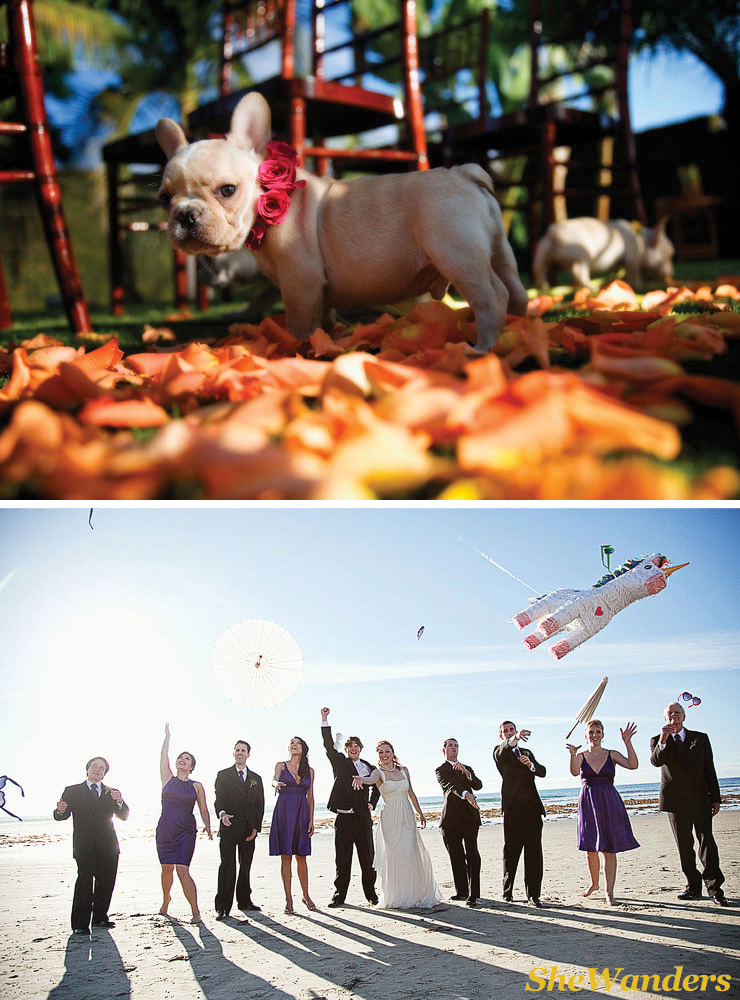 san diego wedding photography, cute wedding puppy, rad bridal party with props