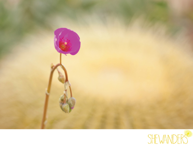 shewanders photography, brightly designed, portrait, purple, fuschia flower